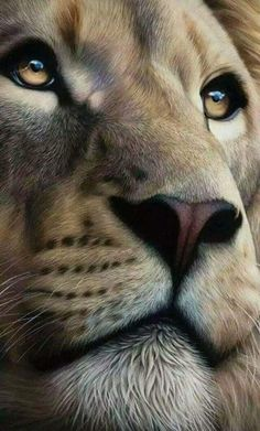 Amazing Lion drawing or painting. Lion of Judah Prophetic art. This is so beautiful! Look at those eyes! Lion Images, Lion Pictures, Animal Pictures, Images Of Lions, Tiger Images, Lion And Lioness, Lion Of Judah, Lion King Art, Lion Art