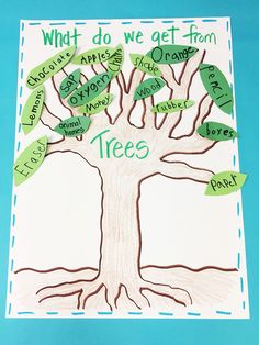 Learning About Trees - Firstieland First Grade Activities, Social Studies Activities, Science Activities, Writing Activities, Classroom Activities, Teaching Science, Science Projects, School Projects, Teaching Ideas