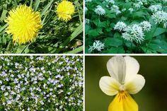 Jak využít květnové bylinky pro detoxikaci organismu Herbs, Plants, Food, Detox, Essen, Herb, Meals, Plant, Yemek