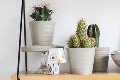 tea-shelf-decoration-cactus-stand