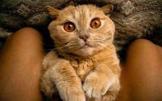 Cat by Egor Mihailov on 500px