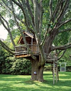 A tree house for the boys! I think if we start building now it may be done by the time they are 5!