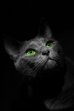 Green eyes !!!