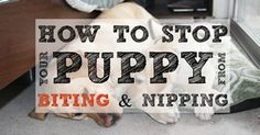Is your puppy constantly nibbling on your hands, feet, legs, and arms? Over the years we've learned a few tricks on how to stop a puppy from biting inappropriately.