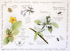Middlewood Journal: Dewberry, Green & Gold, and Lyre-leaved Sage
