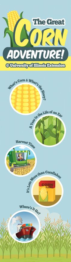 "Learn all about corn with ""The Great Corn Adventure!"" A fun, interactive site for kids!"