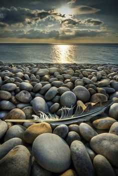 Remains of the day by Peter Vanallen, via Flickr