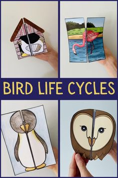 Bird Life Cycle, Life Cycle Craft, Science Experiments For Preschoolers, Science For Kids, Science Books, Cycle For Kids, Cycle Drawing, Owl Life, Animal Projects