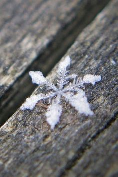 A perfect snowflake in my ~Winter Wonderland~