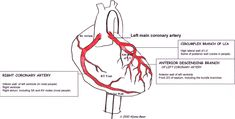Coronary Arteries | Coronary Arteries Labeled