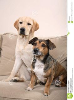two-dogs-couch-4285969.jpg (957×1300)