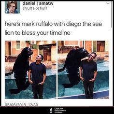 Mark Ruffalo and a sea lion friend Marvel Actors, Marvel Funny, Marvel Dc Comics, Marvel Movies, Marvel Avengers, Loki Funny, Dc Memes, Funny Memes, Loki Thor