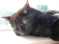 Angel.. cat kitten animal pet cute