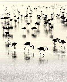 flamingos in silhouette Beautiful Birds, Beautiful World, Beautiful Pictures, Simply Beautiful, Black White Photos, Black And White Photography, Foto Flamingo, White Flamingo, Fotografie Portraits