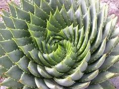 Series de Fibonacci