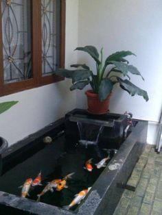 A new design trend has started in the past couple of years, having an indoor pond. Small Water Gardens, Fish Pond Gardens, Koi Fish Pond, Fish Ponds Backyard, Backyard Water Feature, Backyard Landscaping, Outdoor Fish Ponds, Outdoor Water Features, Water Features In The Garden