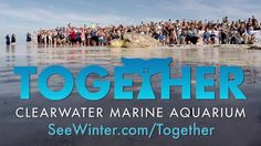 A Record-Breaking Year for Clearwater Marine Aquarium