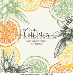 Vector design with ink hand drawn orange fruit, flowers and leaves sketch. Vintage citrus background in pastel colors