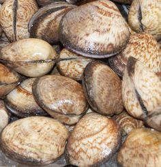 Almonde Clams #fishmonger #fish #coldwaterfish #haddock #cod #mackerel #turbot #tuna #grouper #bream #shellfish #exoticfish #crab #lobster #mussels #trout #scallops #razorclams #shrimp #shark #salmon #salmón #wildsmokedsalmon #smoked #stockbridge #edinburgh #scotland