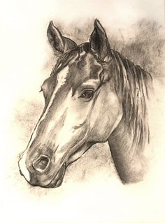 Charcoal horse sketch commission