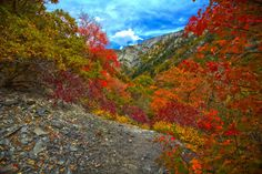 The Fall Foliage at These 21 Places in Utah is Stunningly Beautiful Utah Vacation, Autumn Activities, Stunningly Beautiful, Salt Lake City, Great Places, Things To Do, Places To Visit, Sky, World