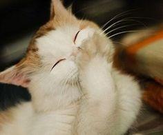 This cat is very cute kitten :-)