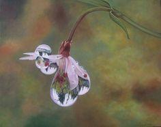 """""""Reflection of Pine Trees"""" dew drop fine art giclee by(Glenda Stevens) GlendaOkiev, $300.00"""