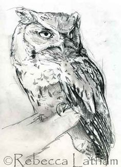 Sketch for Rebecca Latham's new screech owl miniature painting. ~~ This is a new little screech owl piece that I just started working on.  This, of course, is the sketch for the painting.
