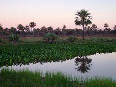 Chaco Húmedo ou Bajo Chaco, no Paraguay (foto: senatur.gov.py)