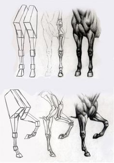 horse cheval horse pose draw a horse croquis de cheval sketch draw horse dessiner un cheval horse sketch sketch of horse r f rence pour cheval horse reference horse model # Horse Drawings, Animal Drawings, Art Drawings, Drawing Legs, Drawing Sketches, Sketching, Horse Sculpture, Animal Sculptures, Horse Drawing Tutorial