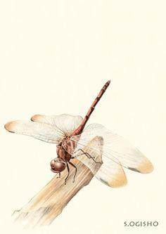 熨斗目蜻蛉. Pictures Of Insects, Pictures To Draw, Colored Pencils, Bugs, Japanese, Traditional, Pattern, Animals, Animales