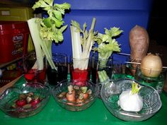 Plant experiment with kids at school. Celery, carrots, radishes, sweet potatoes, onion, scallions, garlic.
