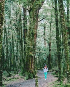 One of the most amazing forests I've ever seen. New Zealand