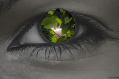 Project 365 #24 - L'oeil végétal