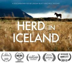 Herd in Iceland is a documentary about the annual round-up of the Icelandic horse, isolated for centuries by the country's oceanic borders.