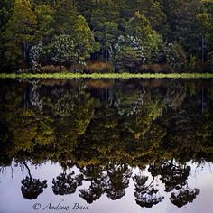 Reflections in the tannin-rich waters of the Pieman River on Tasmania's north west coast, thanks to photographer Andrew Bain. The tannins are absorbed from button grass growing in the river catchment area, making the waters nearly black and highly reflective.  #discovertasmania #tasmania #piemanriver #reflections #nature