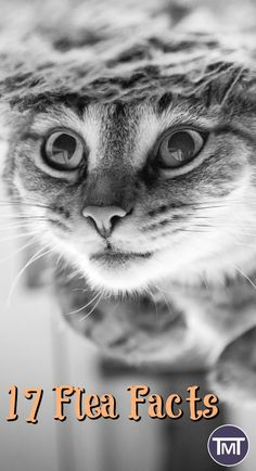 9 Tips For Choosing The Best Cat Urine Cleaner Cat Urine Remover, Pet Urine, Pet Odors, Cat Care Tips, Pet Care, Urine Cleaner, Cat Facts, Find Pets, Pet Health
