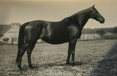 Aversion(1914)(Filly) Nuage- Antwort By Ard Patrick. 3x4 To St Simon, 4(C)x5(C)x5(F) To Galopin. Won Deutches St Leger(Ger), Danubia-Rennen (Ger), Preis Der Stadt-Hannover (Ger). One Of The Foundation Mares Of German Thoroughbred History. Dam Of Alchimist.
