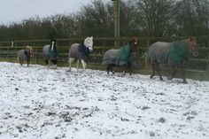 The gang playing in the snow
