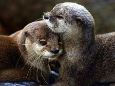 Otters!!