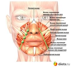 Risultato immagini per facial muscles eyes Massage Facial, Yoga Facial, Facial Muscles, Beauty Skin, Health And Beauty, Face Care, Skin Care, Face Anatomy, Face Health