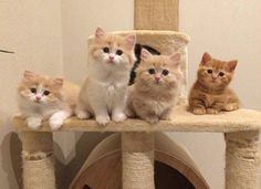 Looks like these 4 kittens are waiting for something, what could it be?