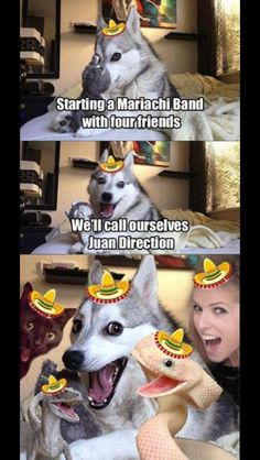 My next favourite internet meme is bad pun husky