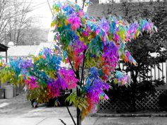 Image detail for -funphotos123 picture by Color Splash - Photobucket Groups