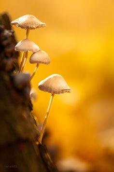 imickeyd:    Irene Mei- Autumn memories