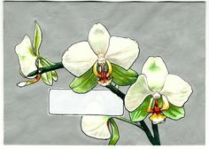 Very recently, I had a friend reach out to me requesting that I paint an orchid for her, in the same format of my envelopes, (with a blank p...