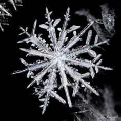 snowflake with 12 branches