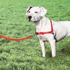 Dog Walk Training Harness Nylon Puppy Trainer 2 Colors To Choose -- Check out this great product. (This is an affiliate link) #Dogs