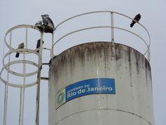 Barra do Piraí Através de Fotos: ONDE A CORUJA DORME -  Onde a coruja dorme é um título sugestivo. Se a coruja estivesse dormindo retrataria uma