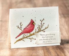 We love this amazing cardinal image from the Beauty of the Season stamp set.